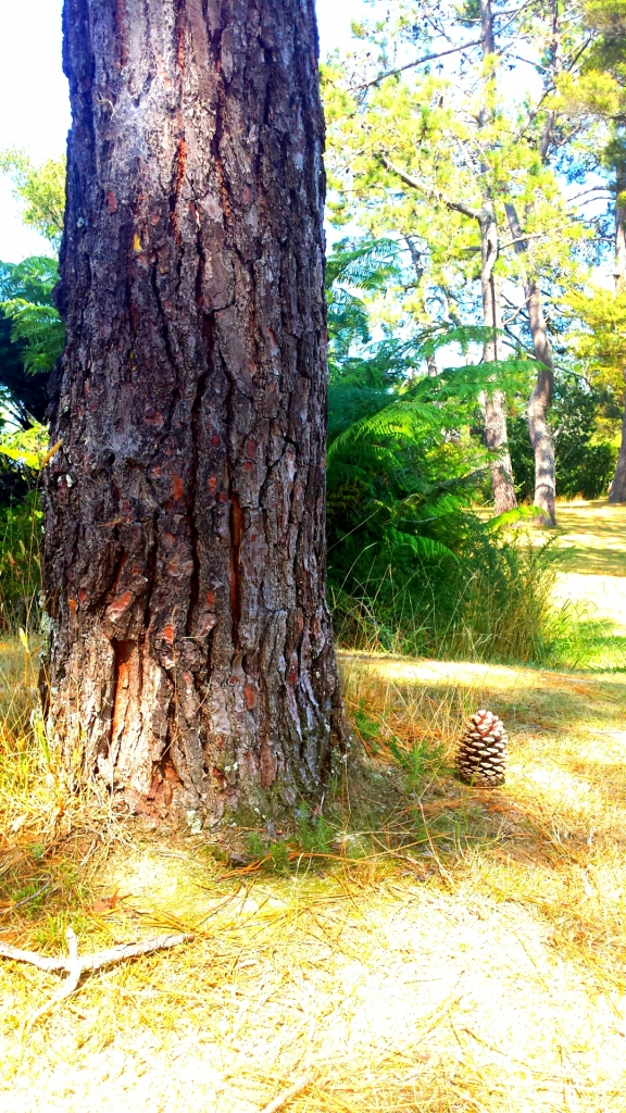 pine tree trunk with a pine cone on the ground to the right.