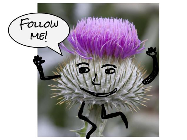 photo of a thistle with a face, arms and legs drawn on it, running away with a speech bubble saying 'follow me'